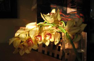 Orchid Sunset 2004